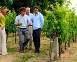 wine-tour-saint-emillio
